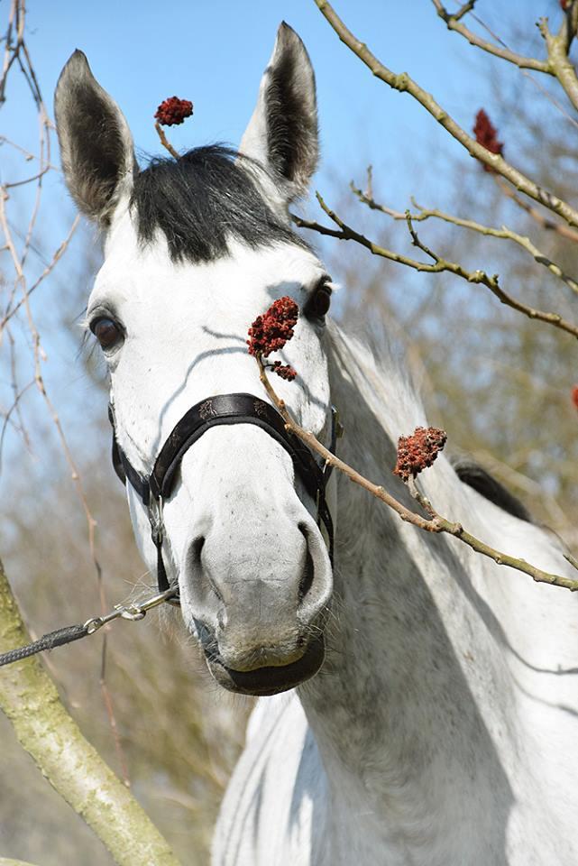 konie-sportowe